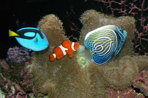 Marine Sea Creatures Through Marine Biology Fishes