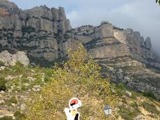 El catganer escala les parets del Montsant.