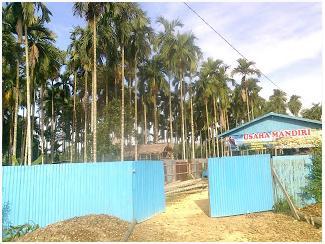 Tempat Usaha Mandiri dengan Latar Perkebunan Pinang