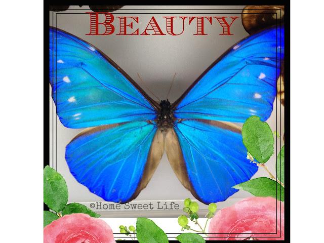 natural beauty, small things