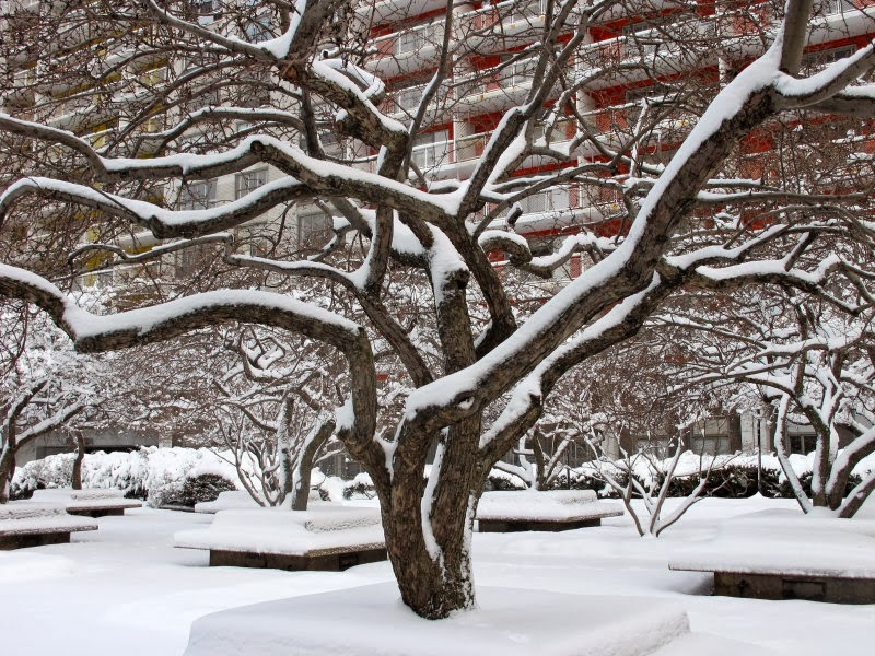 WSV Sasaki Garden, Winter 2013-14