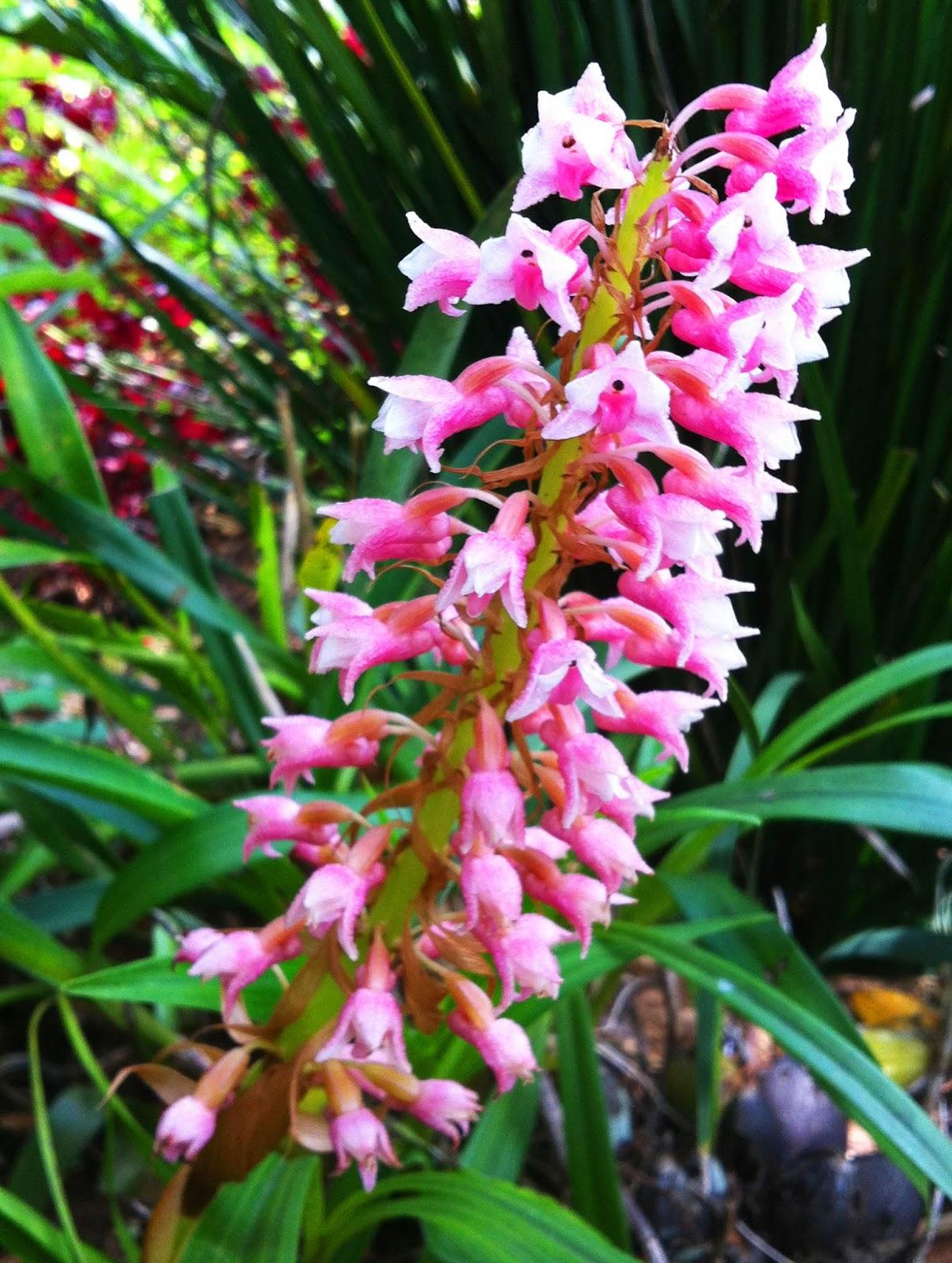 http://lagaleriadelcorazonabierto.blogspot.mx/2013/08/el-paraiso-de-potaltik.html
