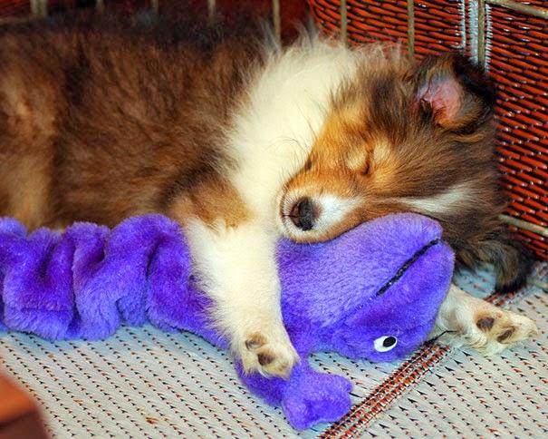 adorable puppies sleeping-1