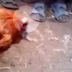 Headless chicken walks around, entertains the crowd like nothing happened