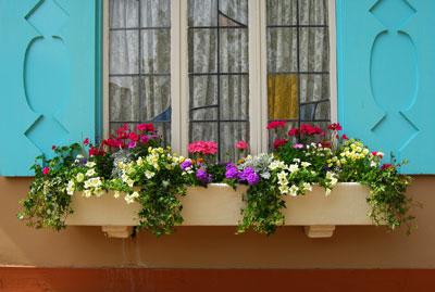 Flores para jardim suspenso