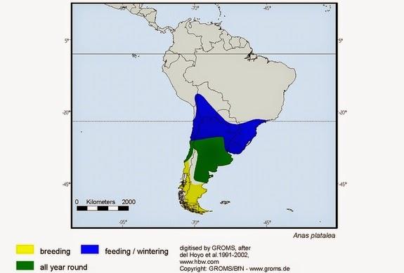 Spatula platalea map Red shoveler