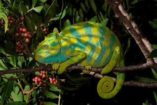 The Chameleon Project