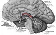 Como funciona un cerebro ganador