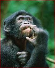 Eu, Macaco?