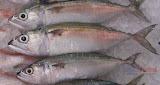 Alumahan - Philippine fish