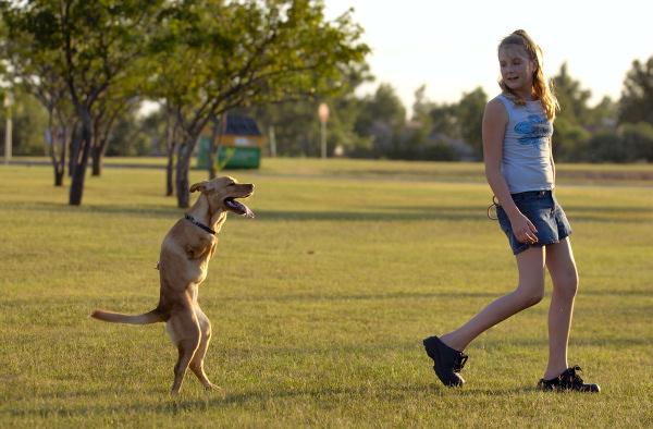 Faith la perrita que nacio sin patas delanteras Faith_the_dog_blog