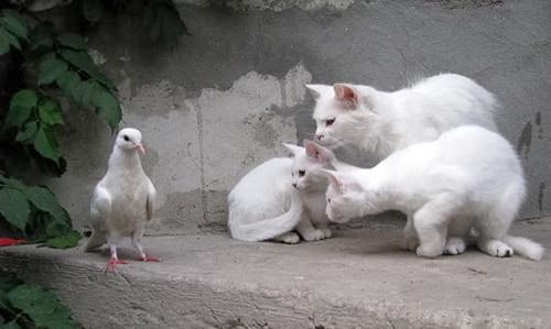 Foto Kucing Imut