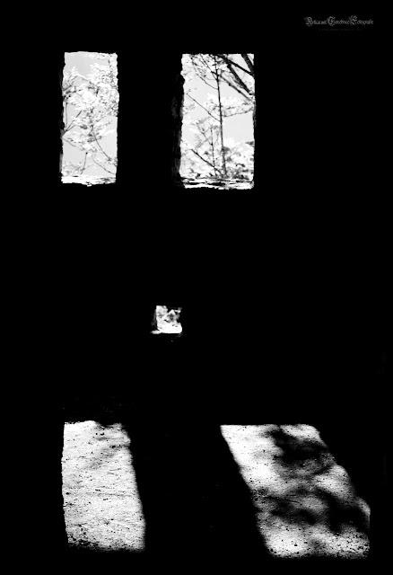 In der Rune Reußenstein