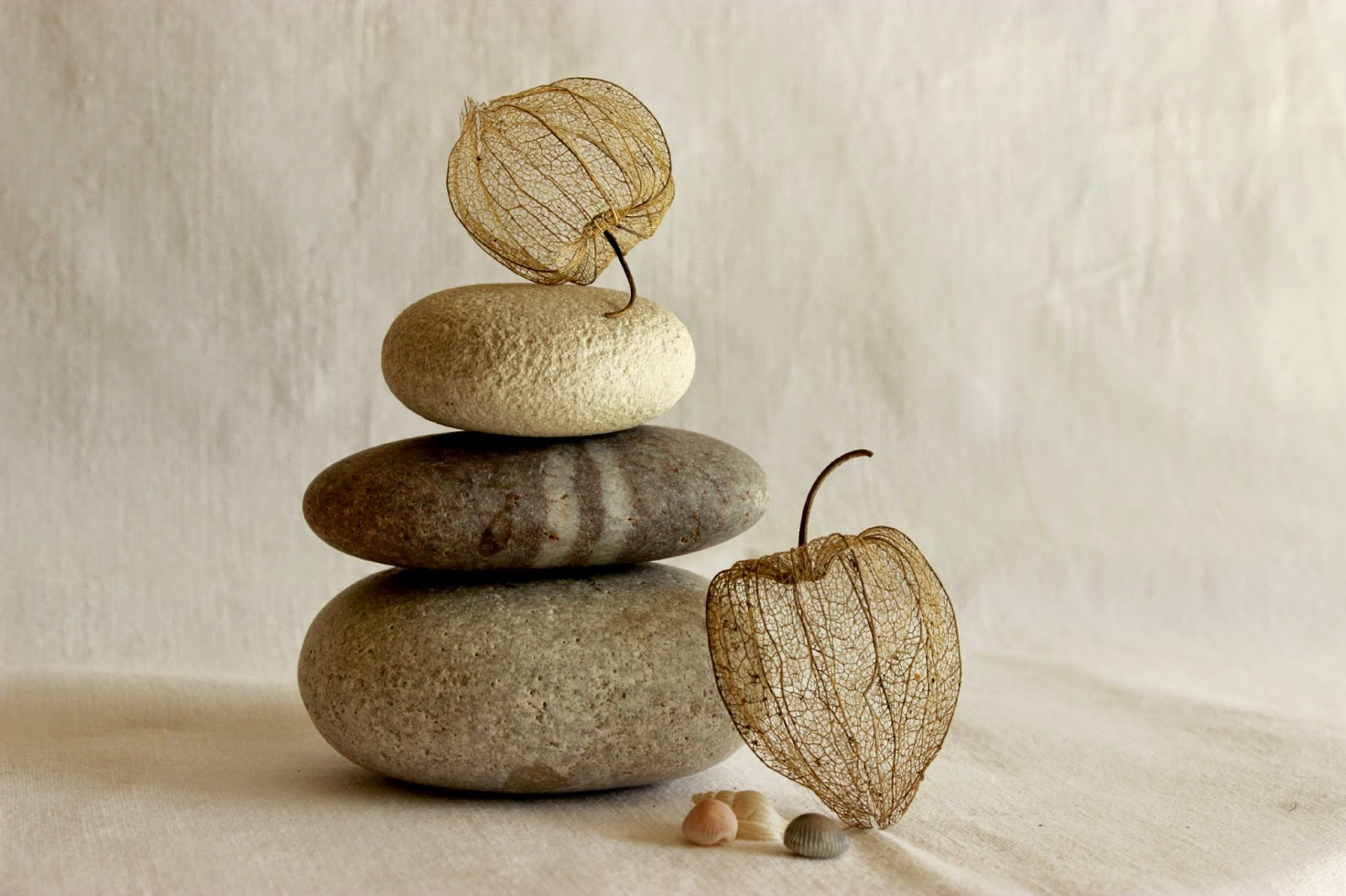 photo still life natural pebbles and seed pod