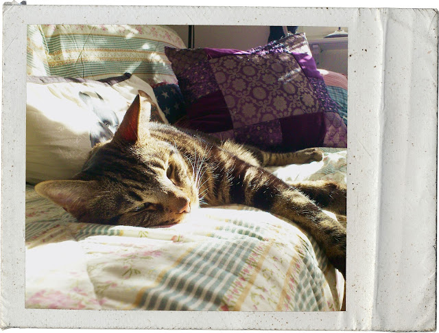 Prince Charming, sleepy, sleeping in the sun, i love my cat