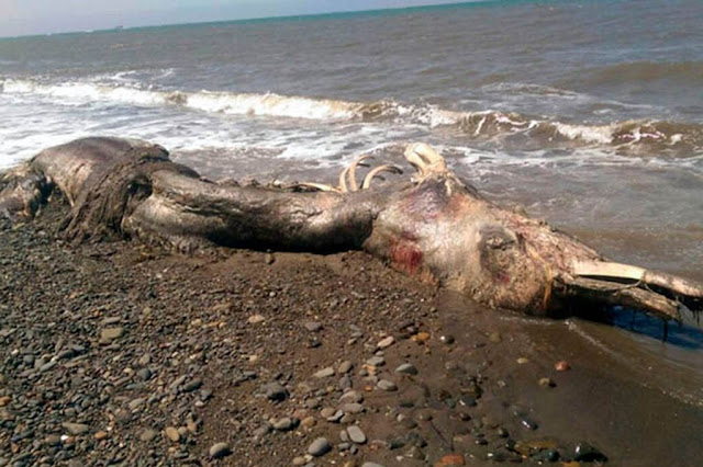 Mystery sea creature with 'fur and beak' found dead