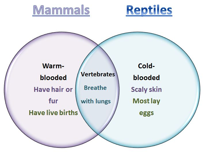 Learning Ideas Grades K8 Mammals and Reptiles Venn Diagram – Mammal Worksheets