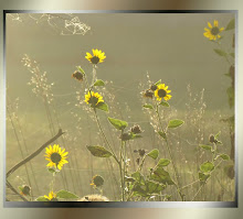 Green Foglight on Sunflowers