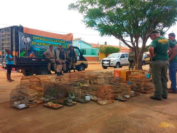 Operação na região já apreendeu 212 aves, incluindo os animais encontrados com o secretário (Foto: Divulgação / PRF)