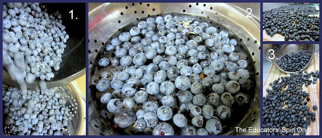 Washing Blueberries I The Educators' Spin On It