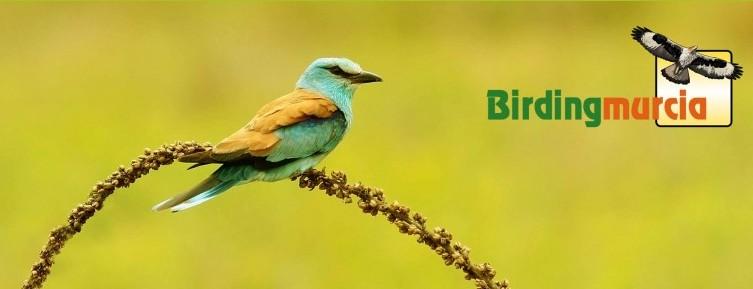 Reportaje en Birding Murcia