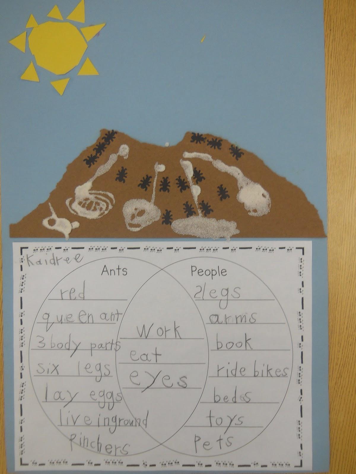 Mrs  T U0026 39 S First Grade Class  Ants