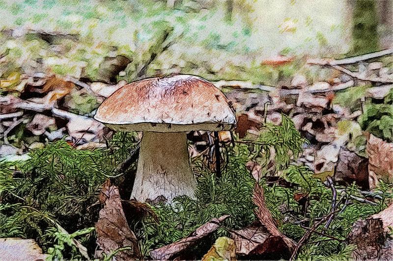 Le retour des champignons - Application pour reconnaitre les champignons ...