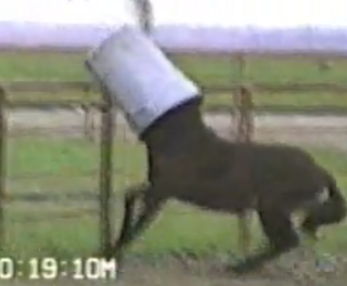 funny horse pictures with his trash