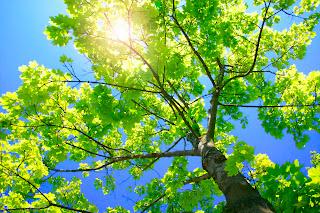 Los árboles protegen del sol