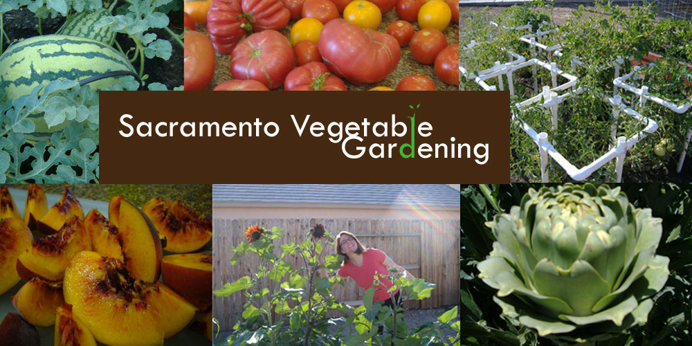 Sacramento Vegetable Gardening