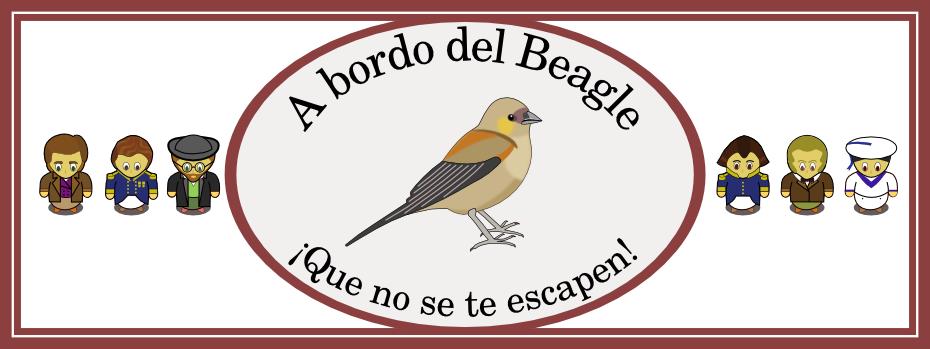 A bordo del Beagle: el juego de Darwin y sus animales