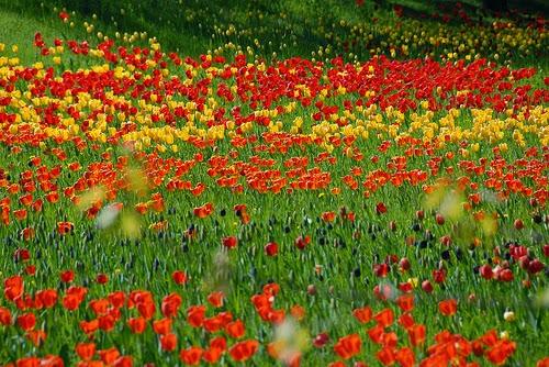 حديقة بتزر الجميلة في برلين