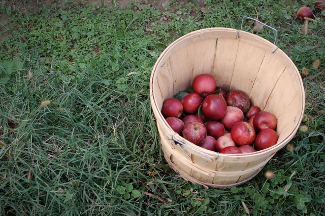 comparing after apple picking to apples essay