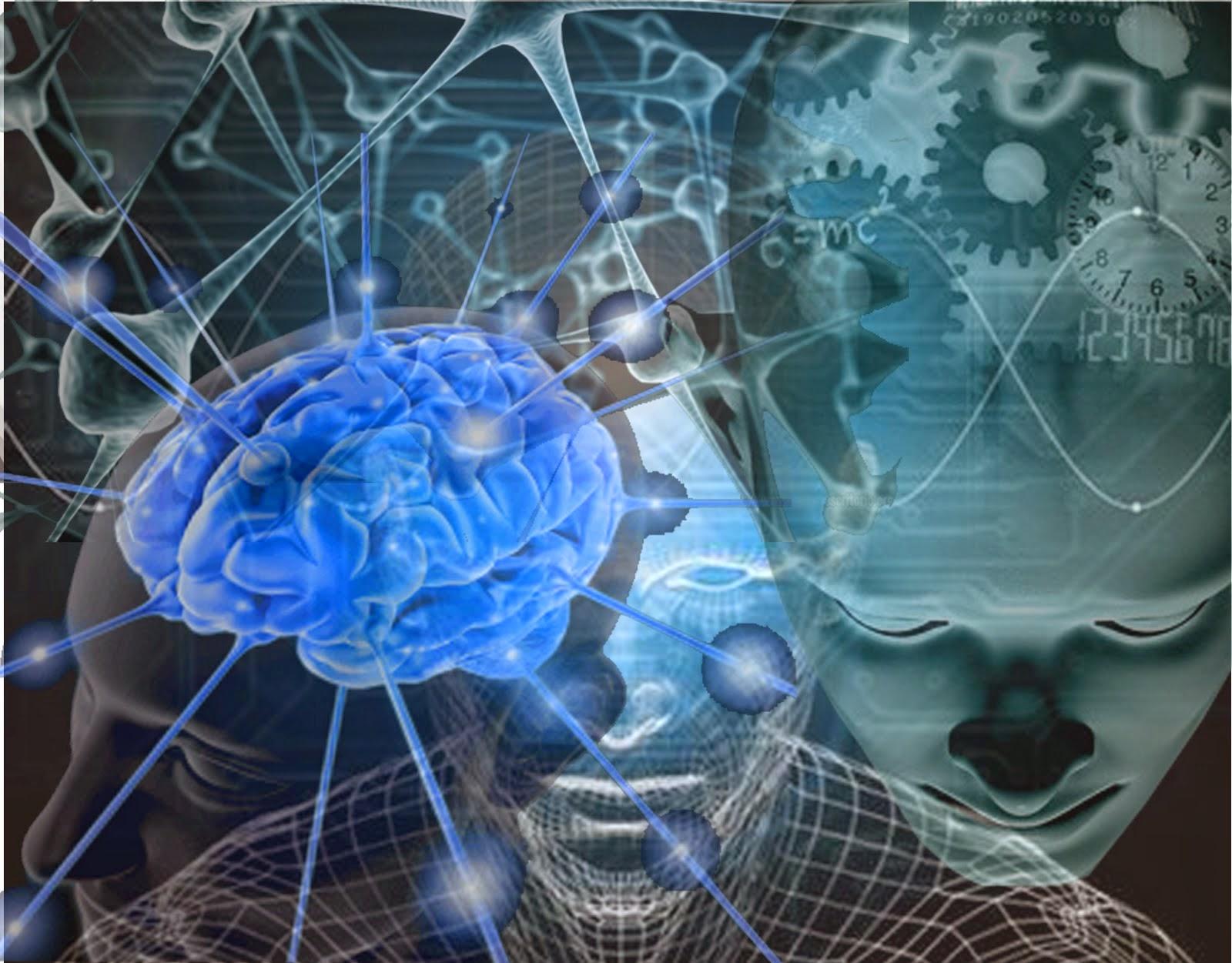 Neuronas, sistema nervioso, cerebro