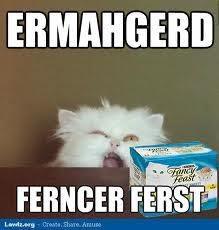 funny cat memes ferncer ferst