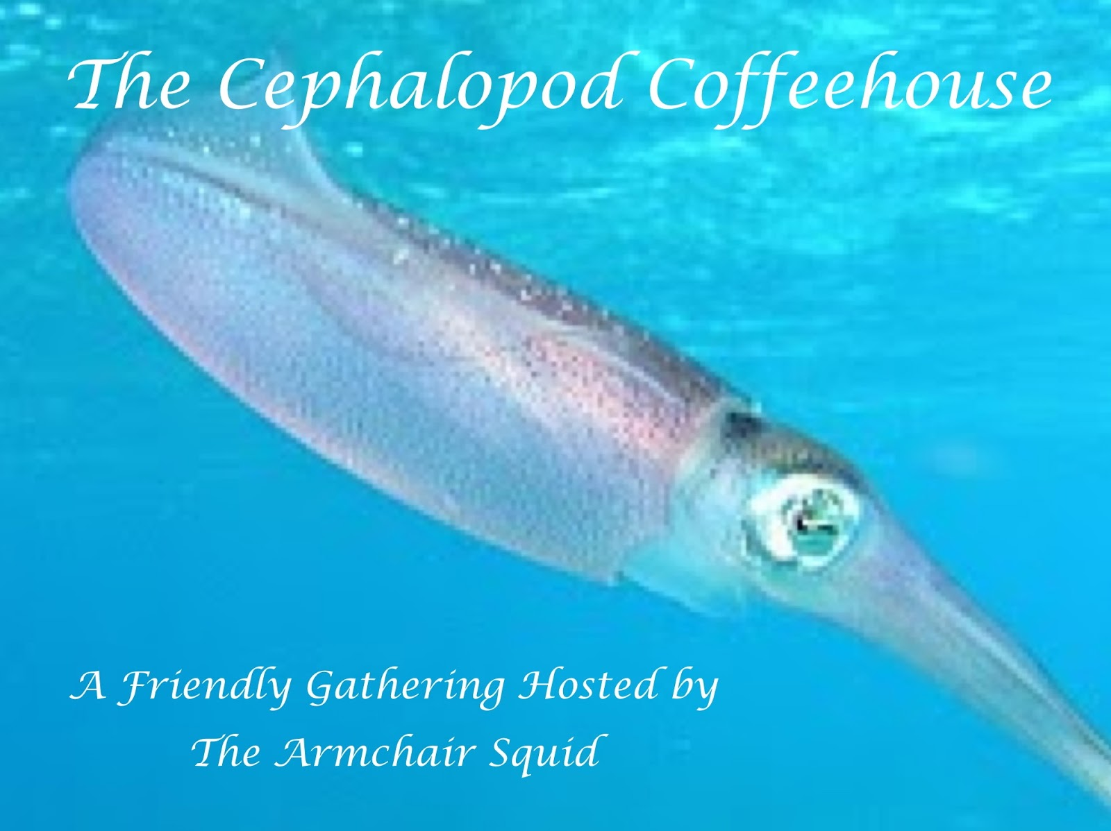 Cephalopod Coffeehouse