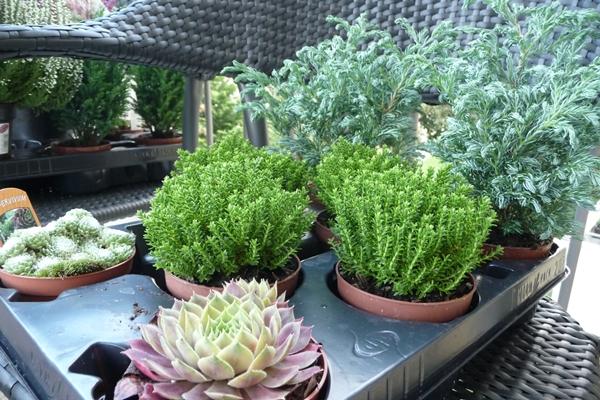 Zauberhafte welten balkon und wanderung for Grunpflanzen fur den balkon