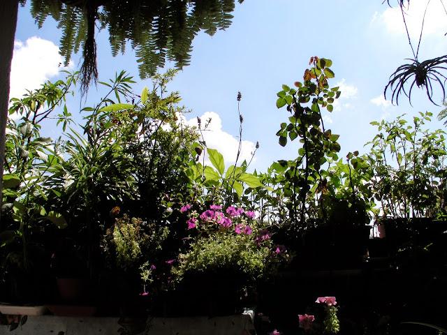 Il blog di teri volini creare e mantenere un orto giardino sul balcone 2009 - Creare un giardino sul balcone ...