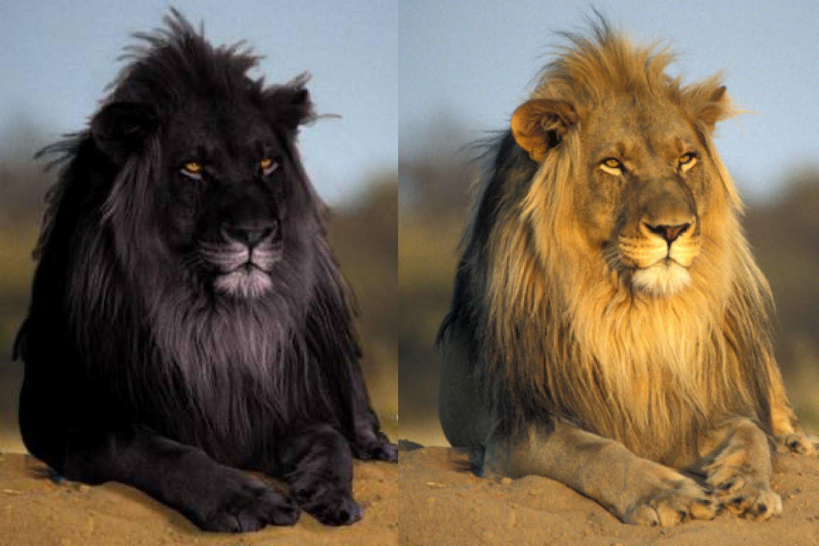 les poissons n 39 existent pas les lions ce que vous n. Black Bedroom Furniture Sets. Home Design Ideas