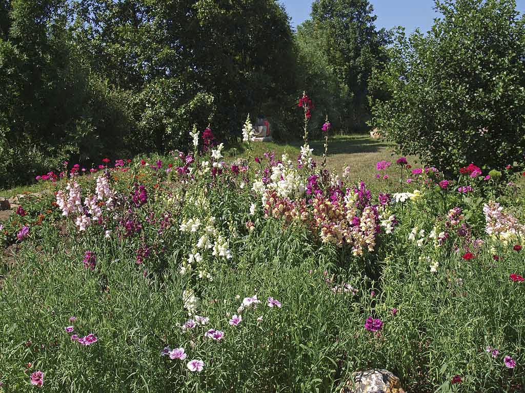 Jard n de mariposas de grado asturias jard n de for Jardines de primavera
