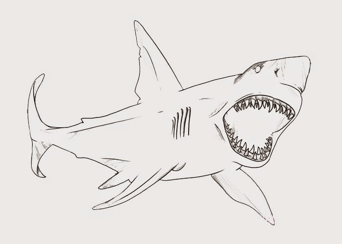 Bull Shark Coloring Page Free Coloring Pages And Shark Coloring Pages