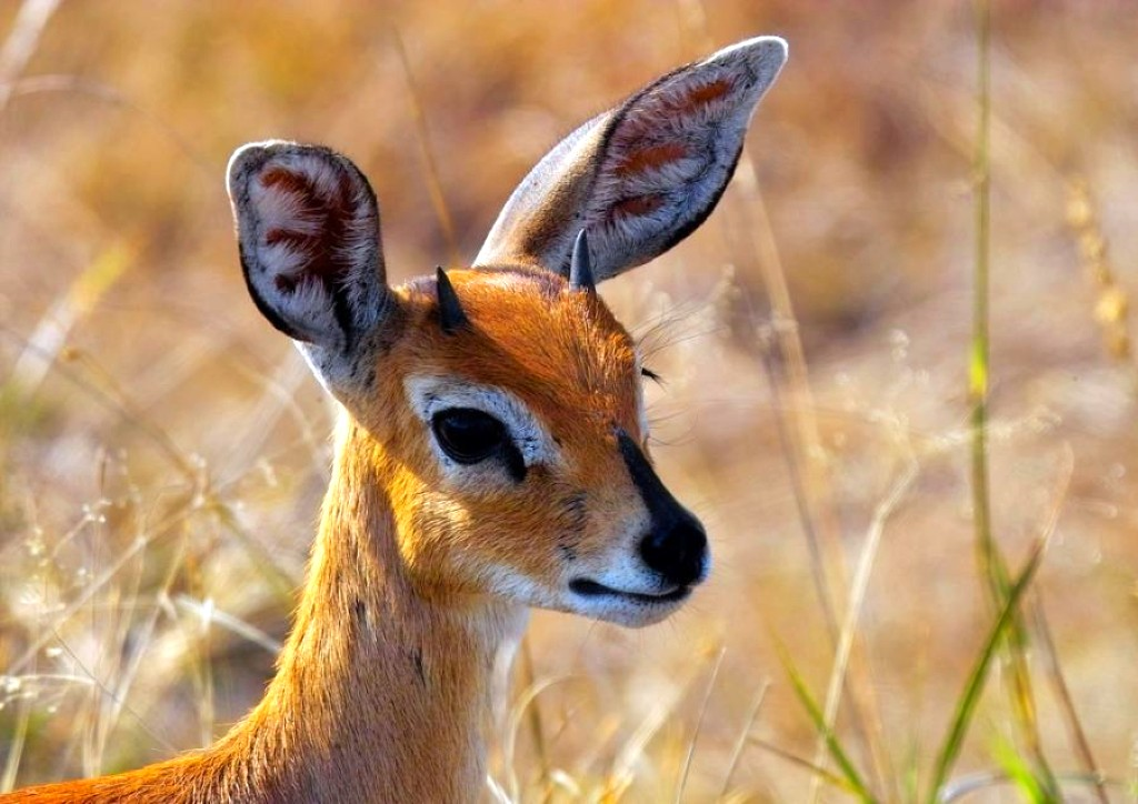 Android phones wallpapers android wallpaper beautiful deer - Hunting wallpaper for android ...