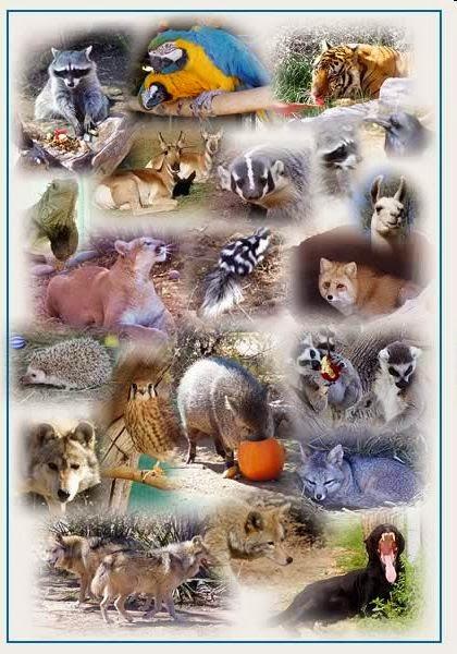a que els animals i les plantes no es: