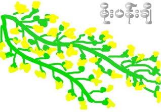 မုိးပန္းခ်ီ