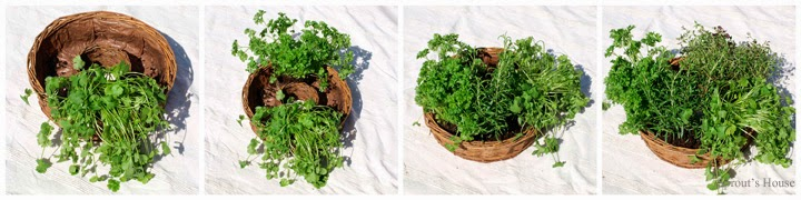 Indoor Herb Garden Tutorial by Sprout's House