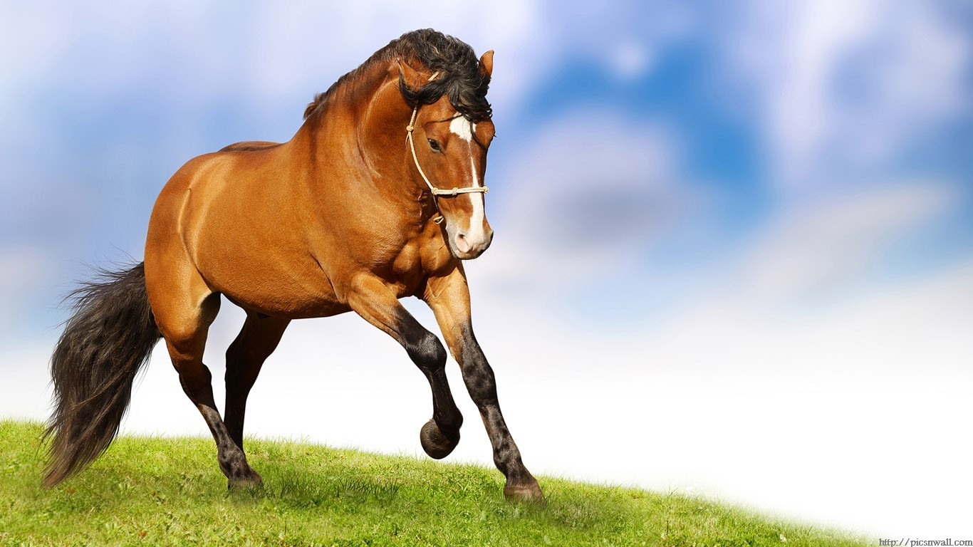 Fantastic horses hd wallpapers 1366x768 green earth posted 14th september 2012 by pradeep kumar thecheapjerseys Image collections