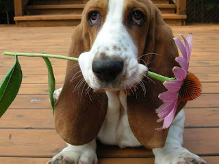 Hund mit Blume im Mund