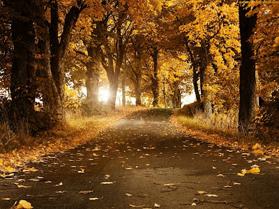 Autumn Season Standard Resolution Wallpaper 8