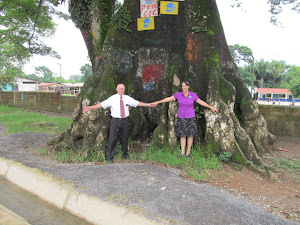 Giant Ceiba Tree