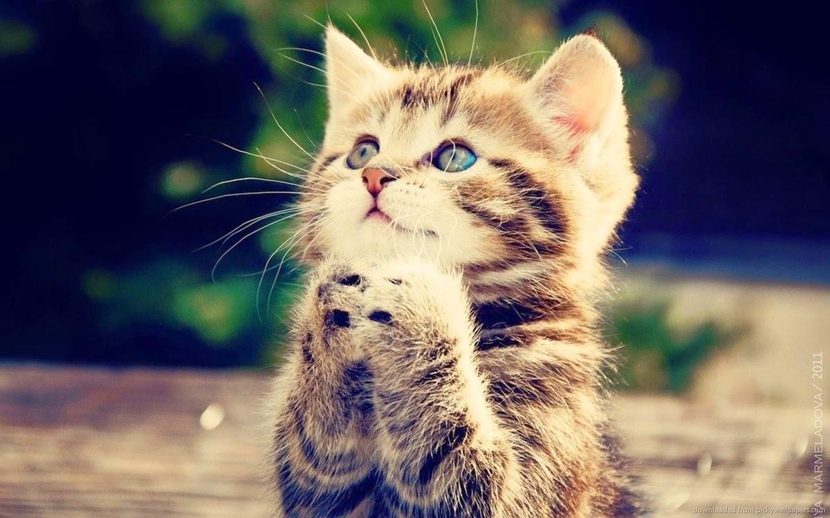 kucing comel lucu